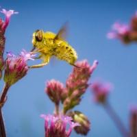 Biodiversity Shapes & Sustains Opportunity